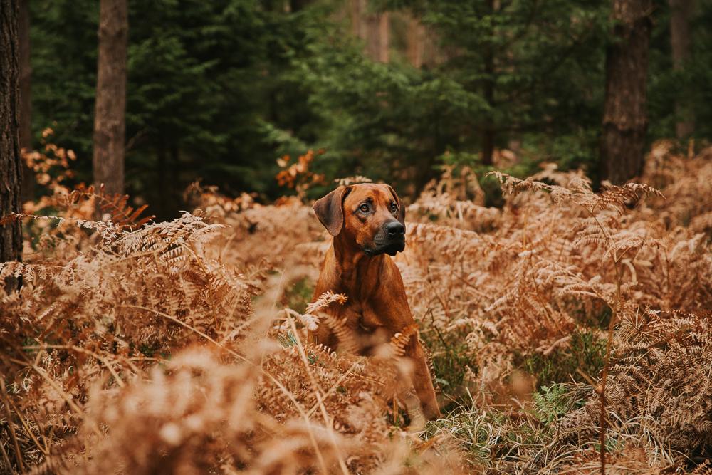 Hundeshooting Wald bei Graal Müritz